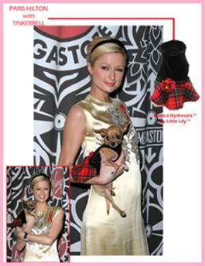 Paris hilton dog clothing