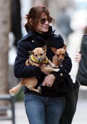 sandra bullock with her dogs