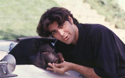 george with pig max
