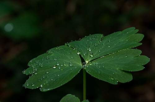 raindrops on leave