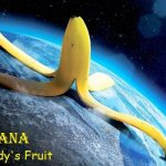 17 Interesting Facts About Bananas