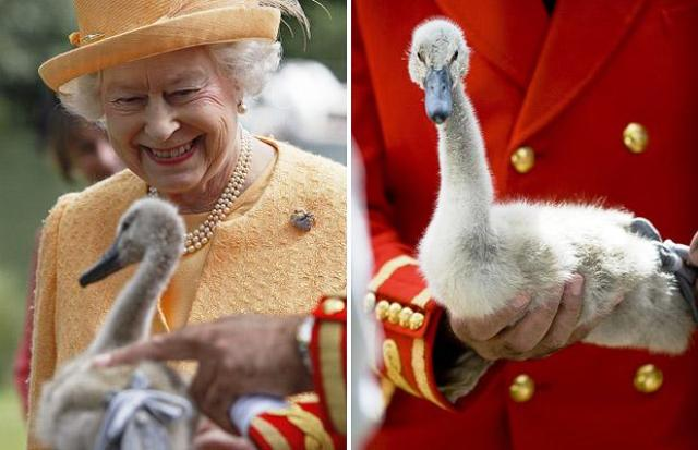 Elizabeth II Swan Owner