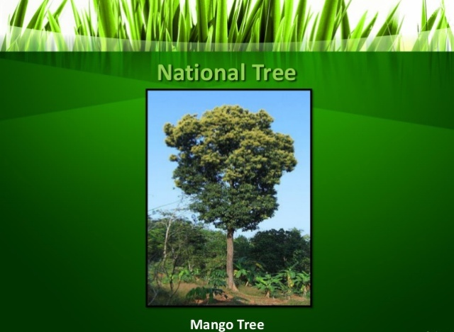 Mango National Tree