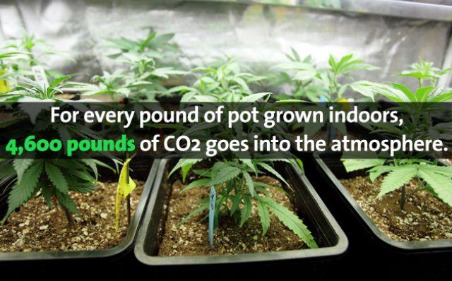Marijuana and Environment