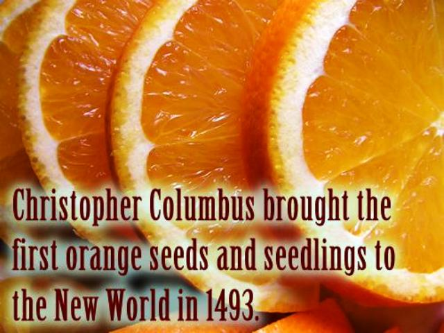 Oranges and Christopher Columbus