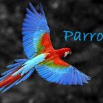 16 Interesting Facts About Parrots