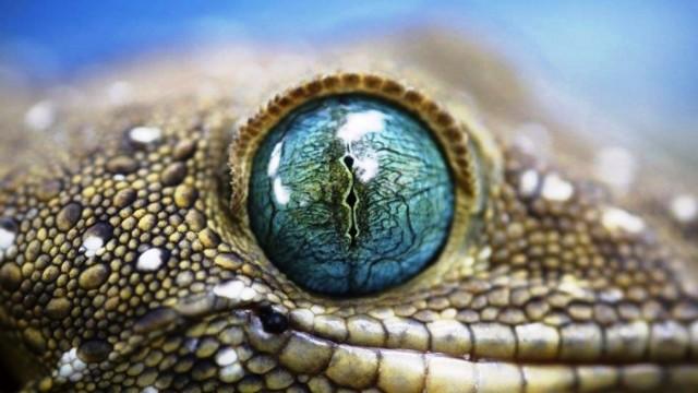 Snake Eyelids