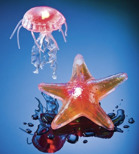 Starfish and Jellyfish