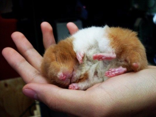 15 Interesting Facts About Hamsters | OhFact!