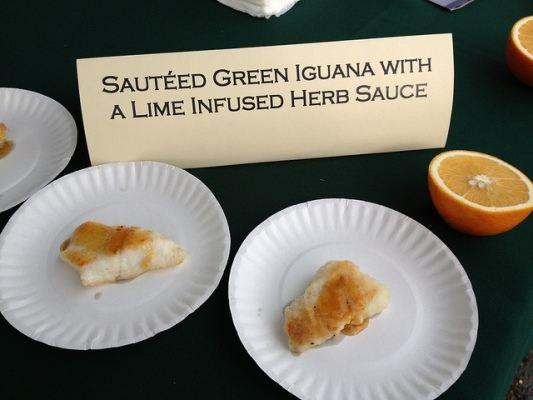 iguana delicacy