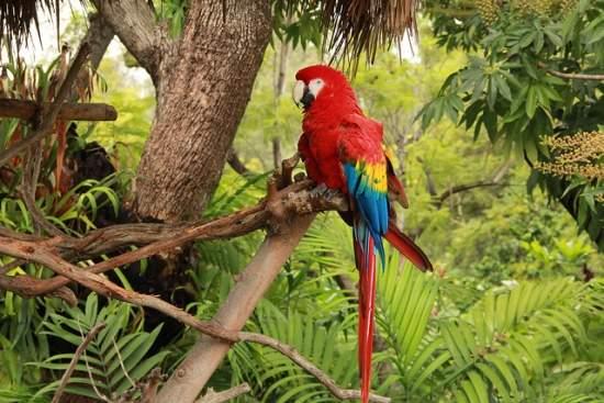 parrot in woods