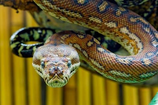 snake stare