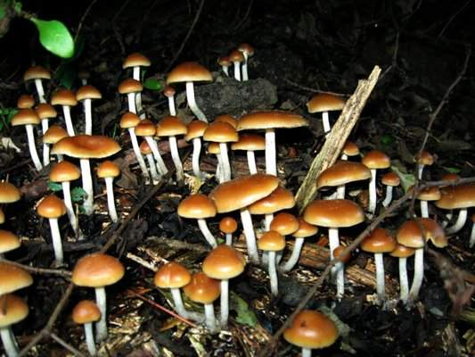 17 Interesting Facts About Magic Mushrooms | OhFact!