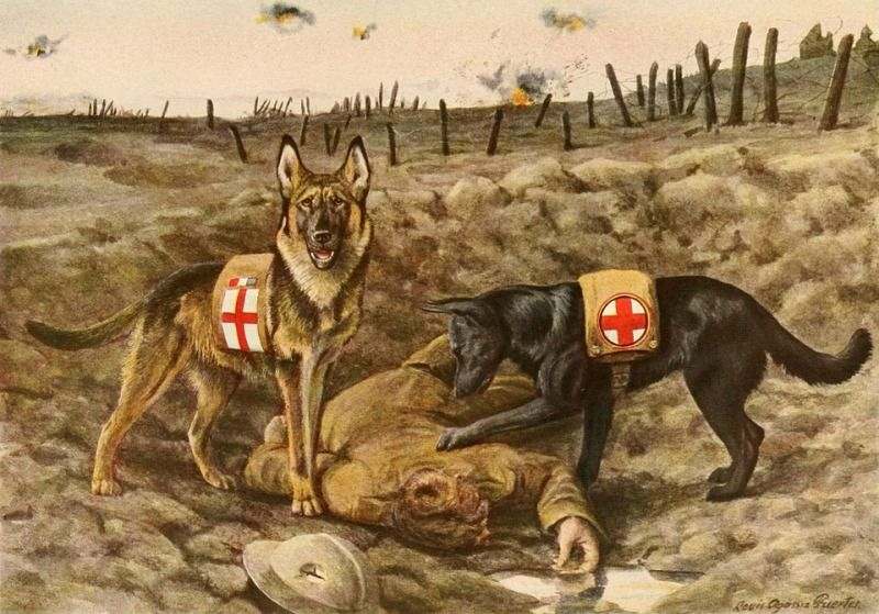 World War 1 Dogs