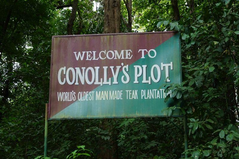 Kerala Teak Plantation