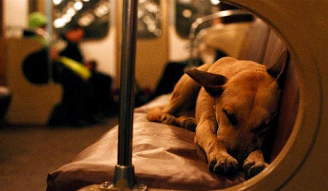 Moscow-Train-Dog-1