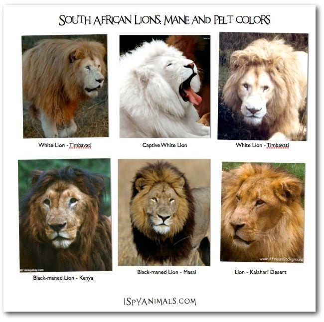 lion mane colors