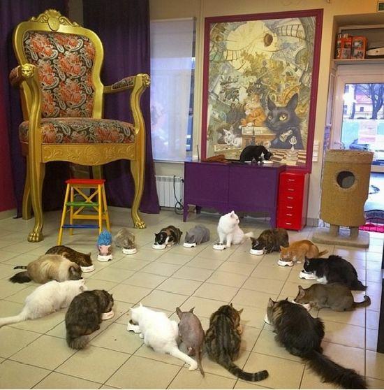 Catsrepublic