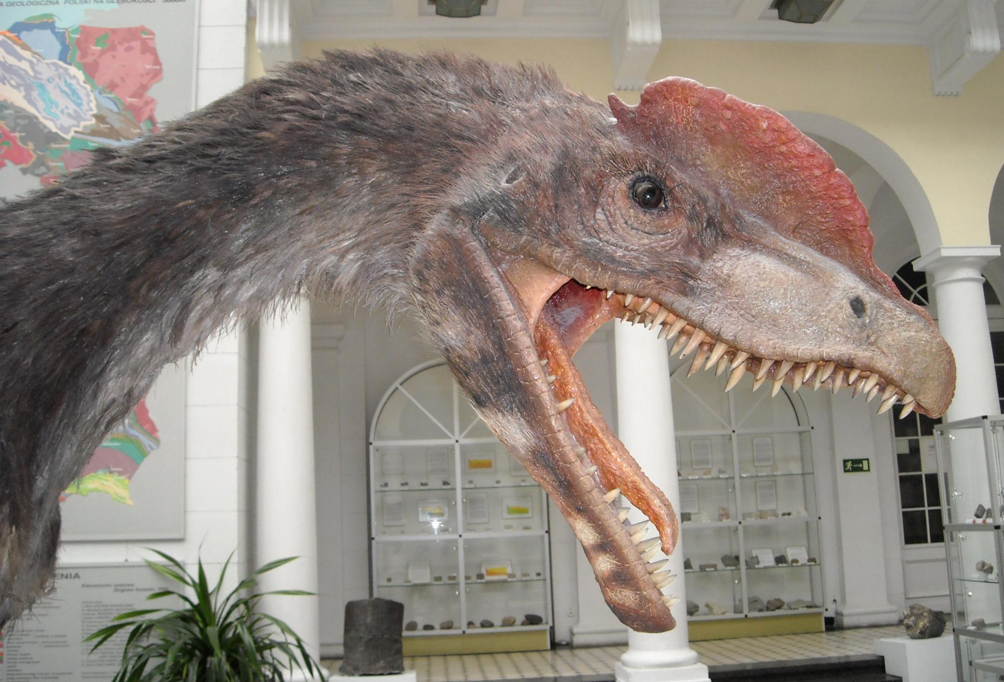 Dilophosaurus_wetherilli_2