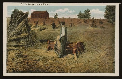 Kentucky-Hemp-farm