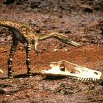 11 Interesting Facts About Coelophysis