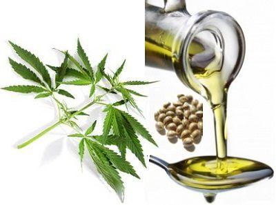 contend-Hemp-Seed-Oil