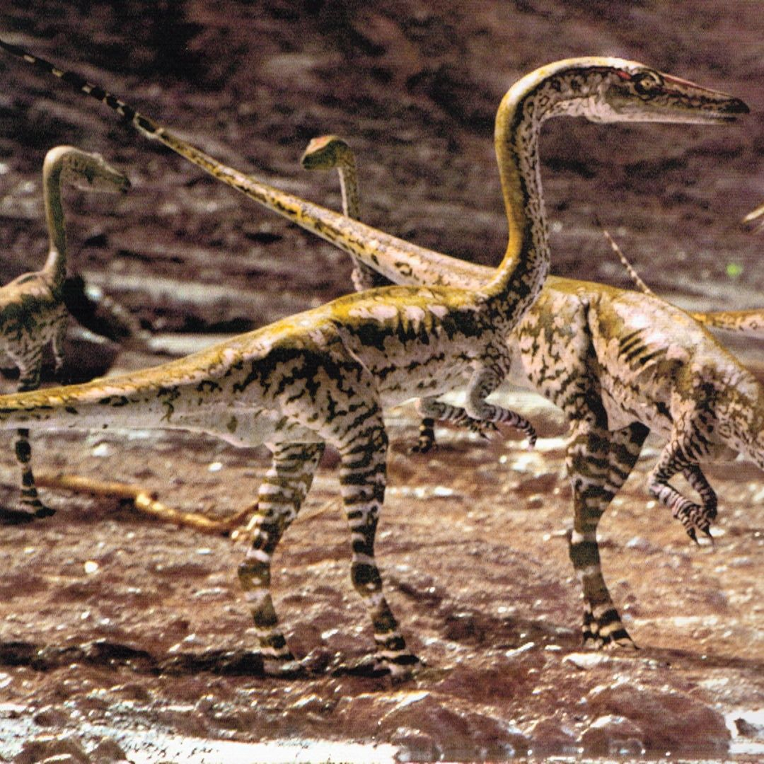 cover coelophysis