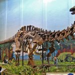 11 Interesting Facts About Sauropods