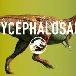 6 Interesting Facts About Pachycephalosaurus