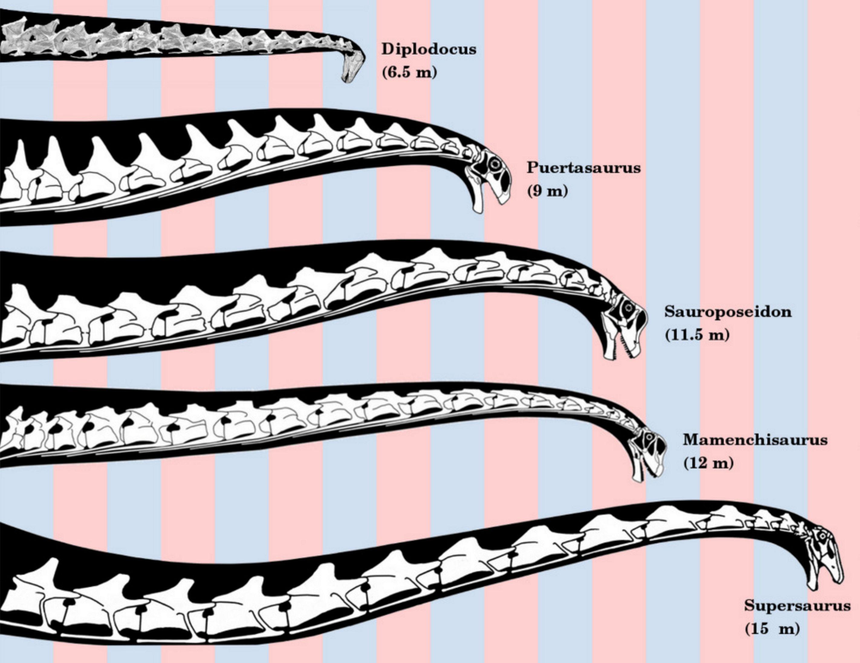 neck comparison