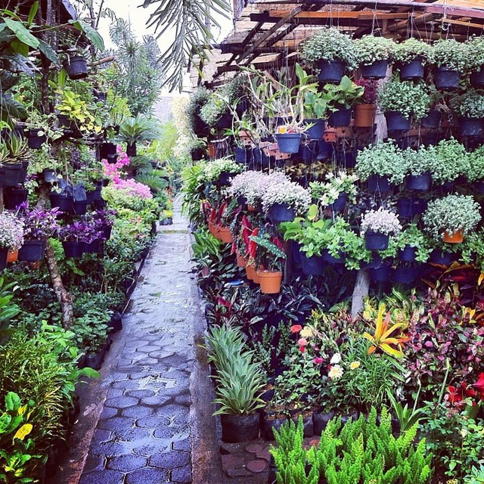 pasar-bunga-bratang
