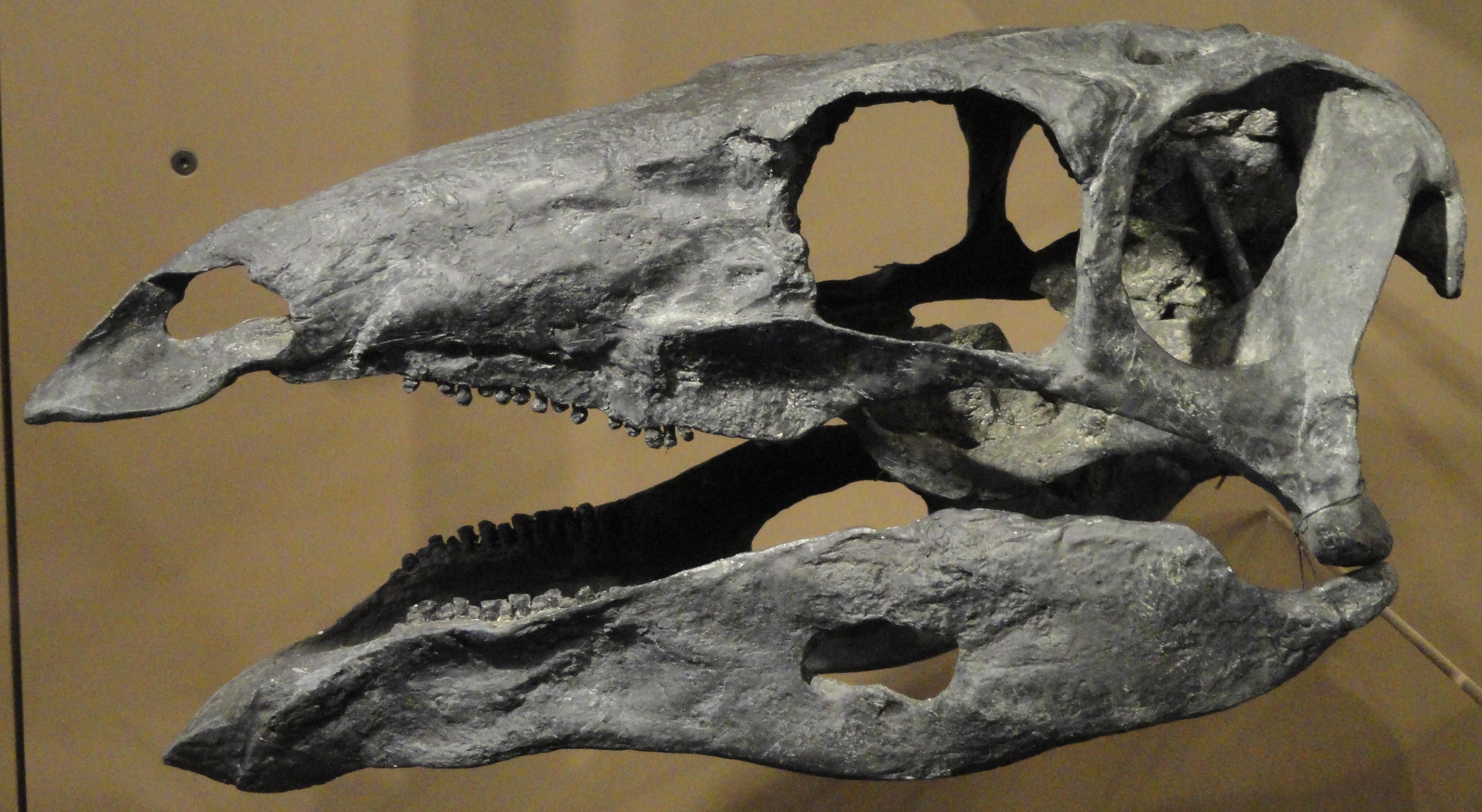 stego skull