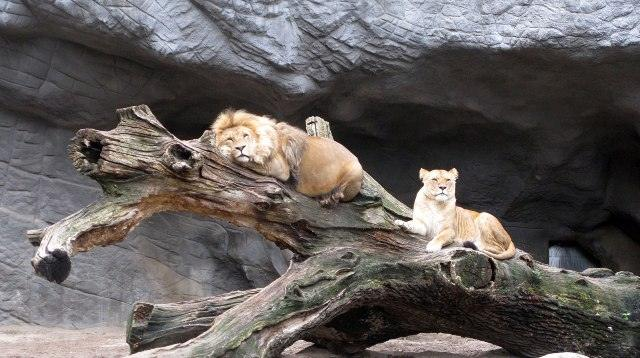 Hamburg Hagenbecks Tierpark