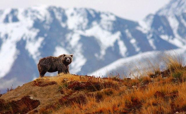 Himalayan Flora and Fauna