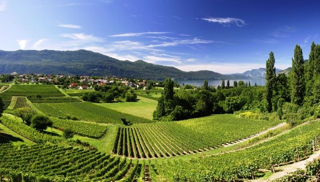 Alps vineyards