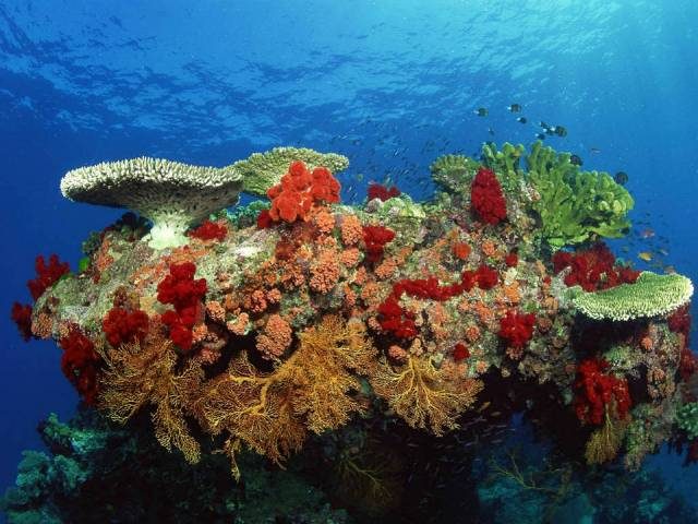 Andaman-Coral-Reef-2