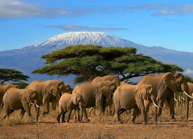 Elephants near Mt. Kilimanjaro