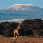 13 Interesting Facts About Mt. Kilimanjaro