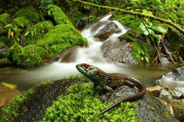 Peru biodiversity