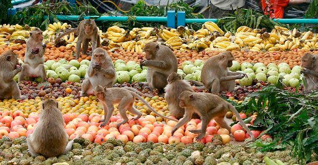 Monkey Banquet Lopburi, Thailand
