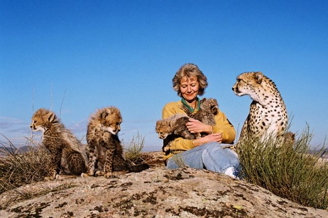 A Woman Playing with Cheetah
