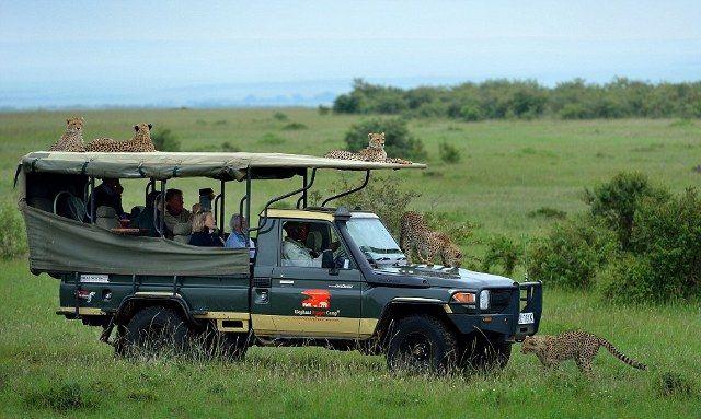 Cheetahs on Car