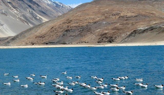 Leh ladakh birds