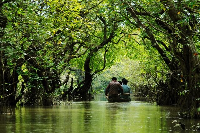 Mangrove Forest in Bangladesh