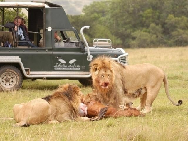 Safari Tour in Zimbabwe