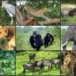 12 Interesting Facts About Serengeti National Park
