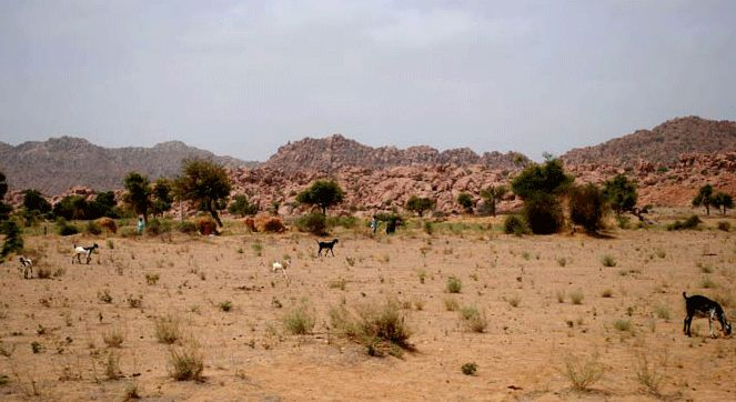 Shrubs at Tharparkar Desert, Pakistan