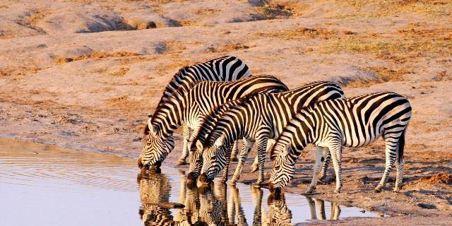 Wild Life of Zimbabwe