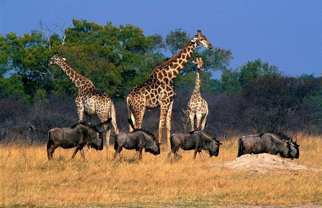 Wild life in Hwange National Park, Zimbabwe