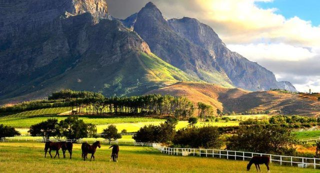 Winelands of Cape Town, South Africa-compressed